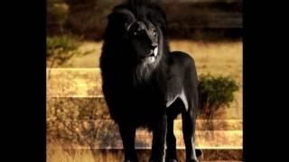 La Verdad Sobre El León Negro, O León Del Cabo