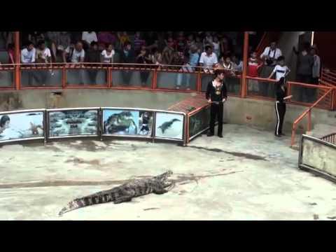 Xiếc cá sấu 2MTS HÓTclip vui hay nhất 2014