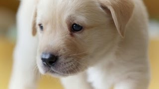 Puppy Opens its Eyes for the First Time: The Secret Life of the Dog