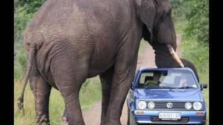 World's Biggest Animals 3