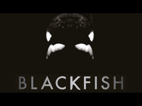 BLACKFISH - Killer Whales at SeaWorld Documentary Maker Gabriela Copperthwaite