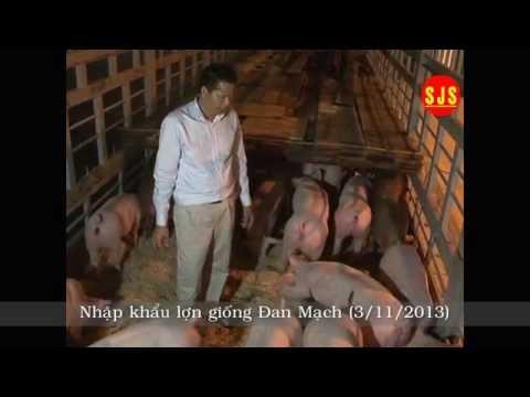Nhập khẩu lợn giống Danbred - Đan Mạch 11/2013