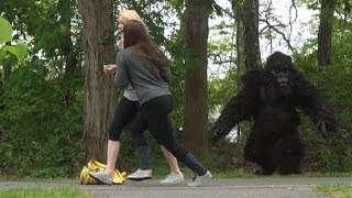 Don't Touch the Bananas! Studio Gorilla Scare Prank