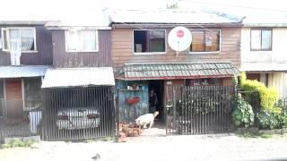 perro entra leña en Puerto Montt