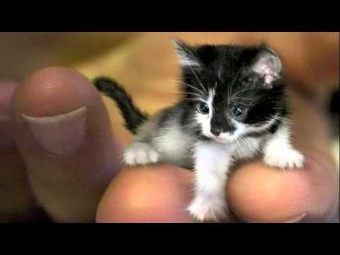 smallest cat in the world guinness 2012 on decorating