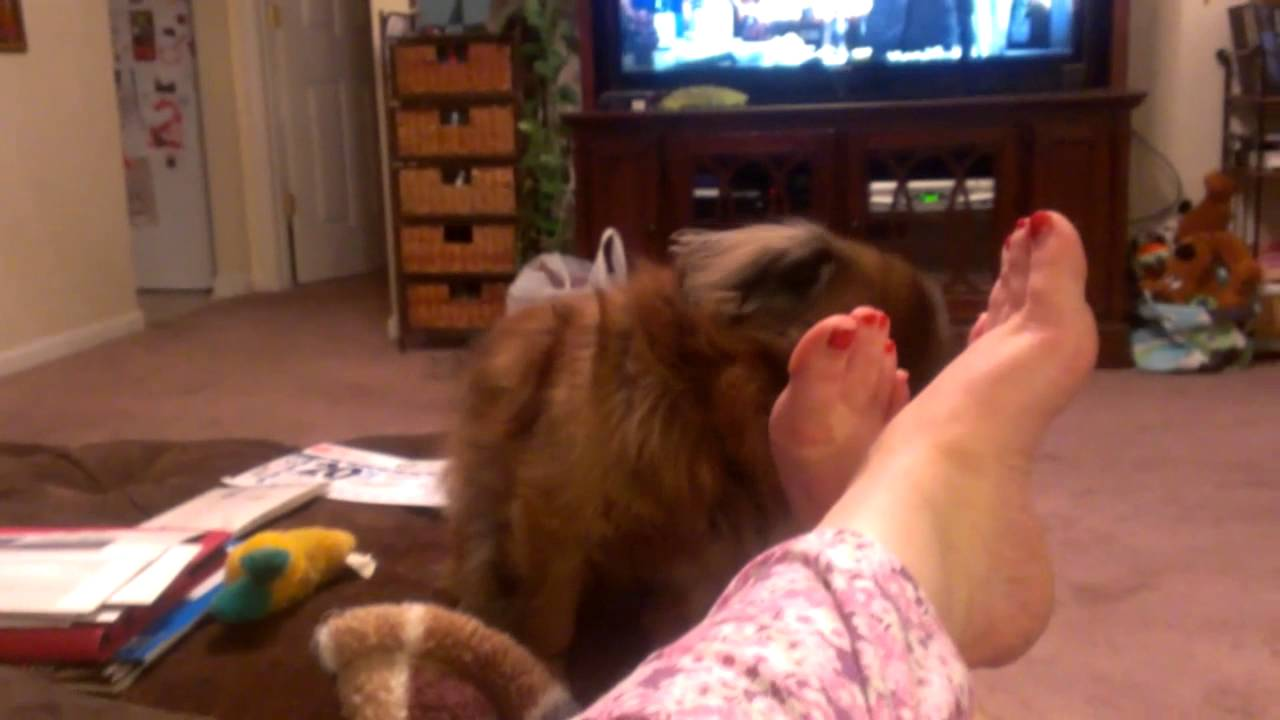 how to stop dog licking foot