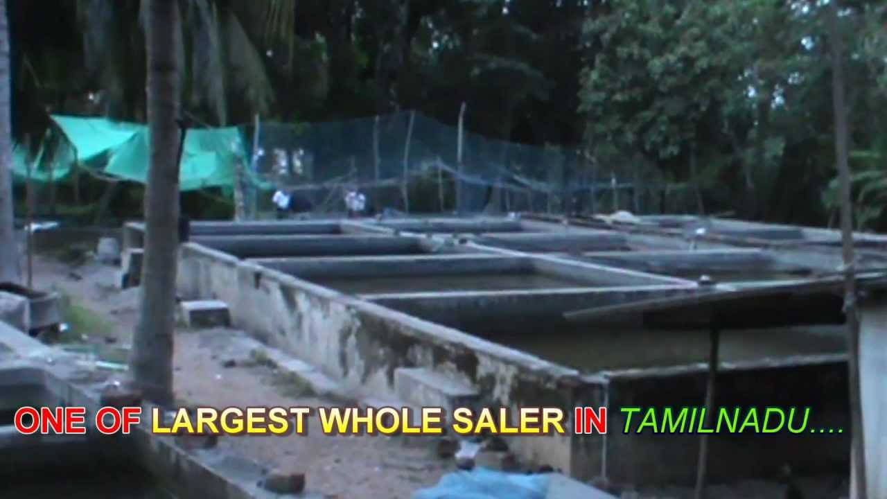 kadachanandal fish farm madurai - YouTube