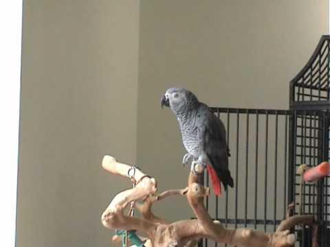 Papuga poznała tajemnicę szczęścia