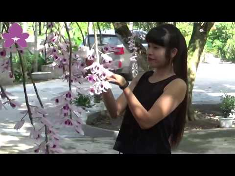 Hoa Lan TV: Chiem Nguong Vuon Lan Huyen Thoai Co Mot Khong Hai O Tuyen Quang (IV)