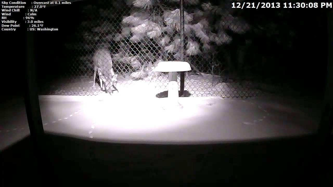 Nagranie w nocy z kamery Dericam H502W