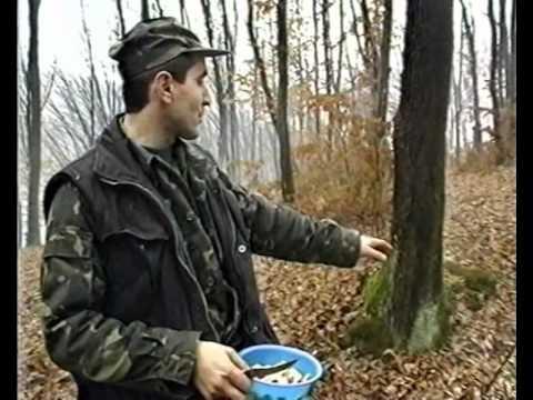Охота на лис с норными на Закарпатье