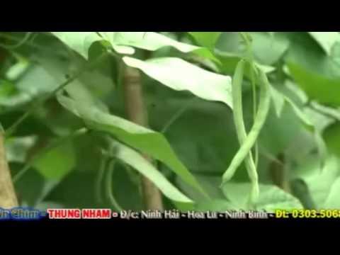 Thung Nham - Ninh Binh | Vietnam Tourism