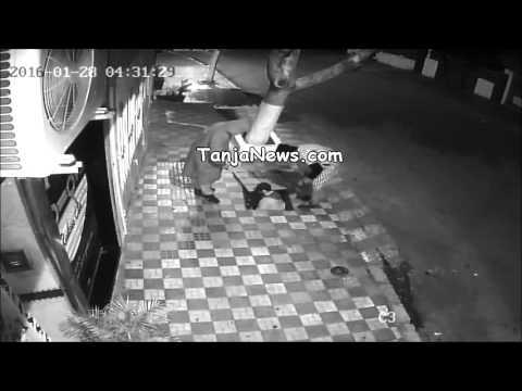 طنجة: سرقة أسلاك الهاتف بمنطقة عين قطيوط