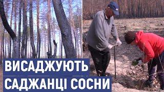 На Луганщині висаджують дерева на місці згорілого лісу