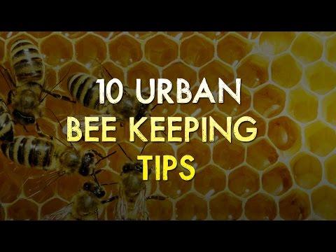 10 Urban BeeKeeping Tips For Beginners