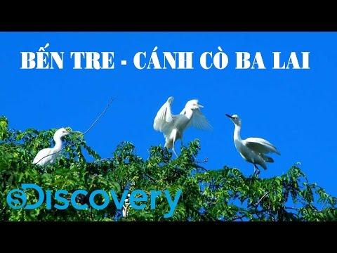 S Discovery | Bến Tre - Cánh cò Ba Lai