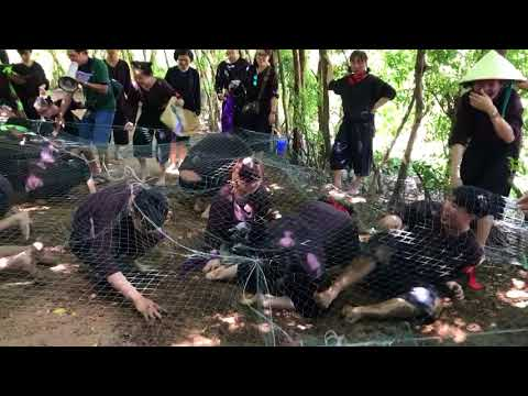 Đào khoai- lan vuong- muong thanh 18-9-2017