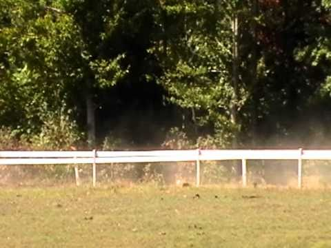 Poetic Touch Lovely Saratoga Nutty Cat Princess Corrigan 08 workout.MOD