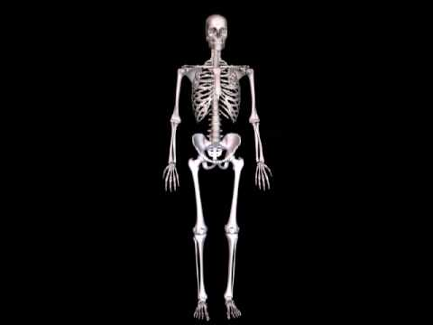 human skeleton 3d animation youtube