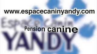 Espace Canin Yandy: Pension, éducation et toilettage en renforcement positif (chiens et chats)
