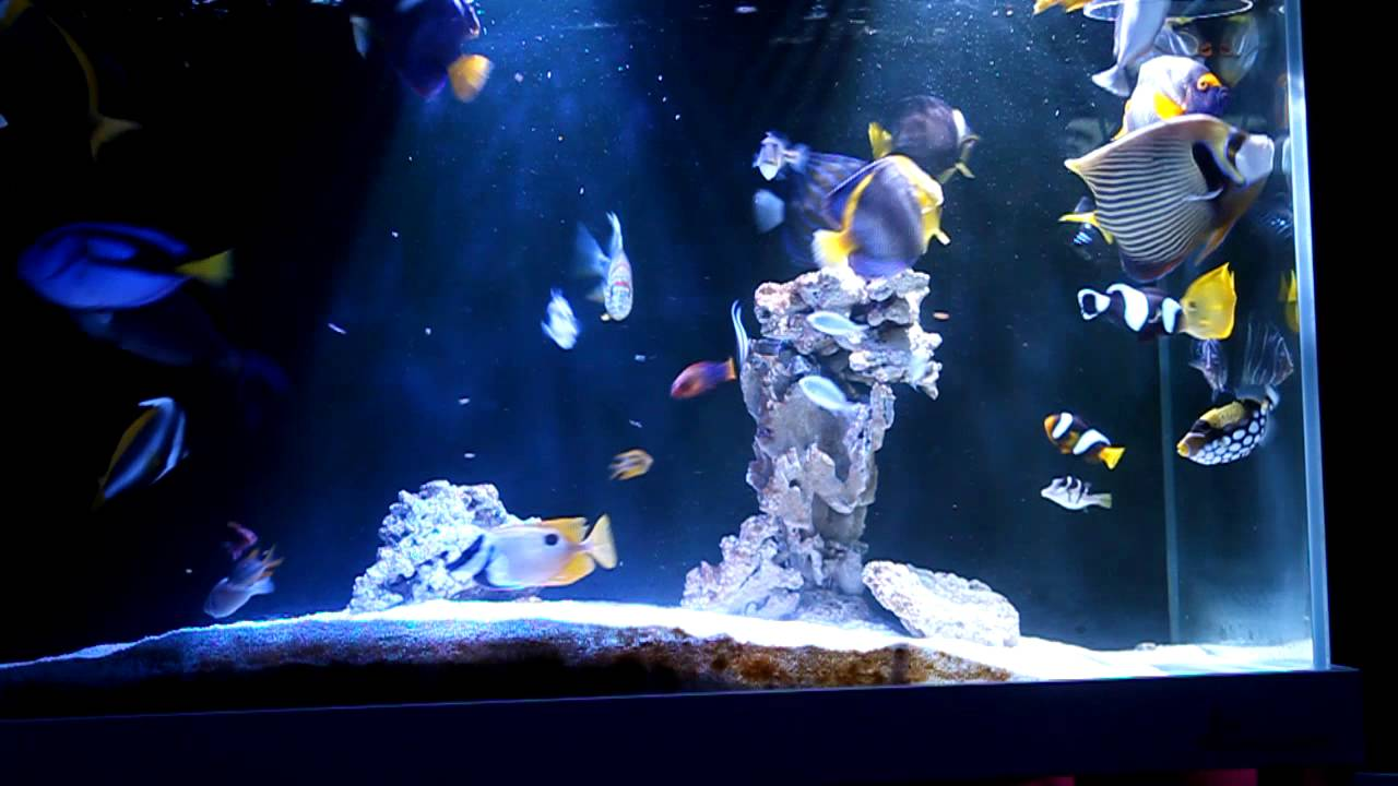 Fish only tank youtube for Youtube fish tank