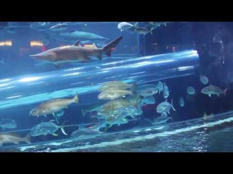 Shark Tank Aquarium in Golden Nugget Casino of Las Vegas - Water Slide