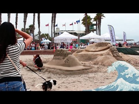 SURFING DOGS! (DAY #2) -DAILY VLOG