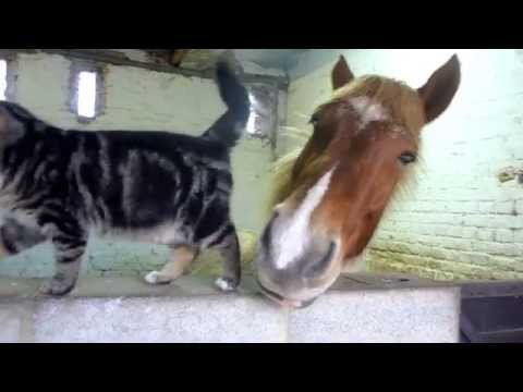 This Kitty And Horse Love Each Other