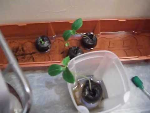 Aeroponic system home made part 5