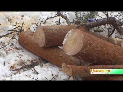 Тальменцы готовы дойти до Президента, чтобы защитить лес от вырубки