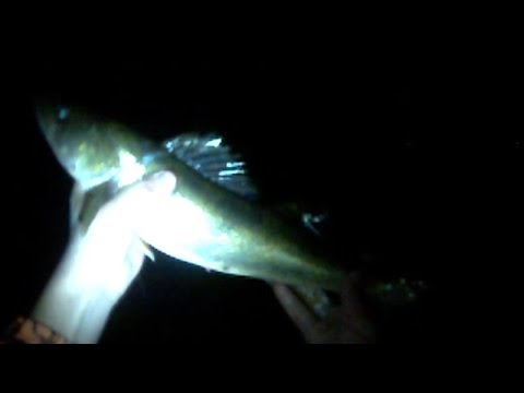Lures Only #48: 10 Walleye and 1 Smallmouth Bass