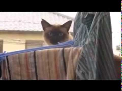Cat Jump Fail With Music Sail By Awolnation Cats Know