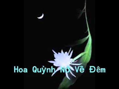 Hoa Quỳnh Nở Về Đêm - Rap Viet