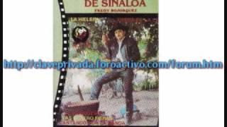 El Puma De Sinaloa El Chimborazo