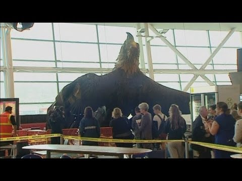 New Zealand earthquake: Hobbit statue of giant eagle torn off ceiling at Wellington airport