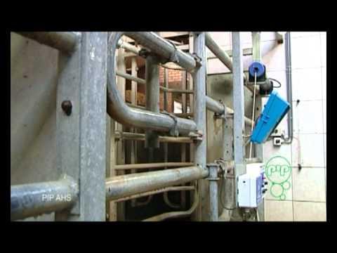 Zootehnie-Probiotice PIP pentru animale si adaposturi pentru animale(vaci  /bovine)