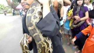 World's Biggest Snake NEW 2013 World's Biggest Snake Found