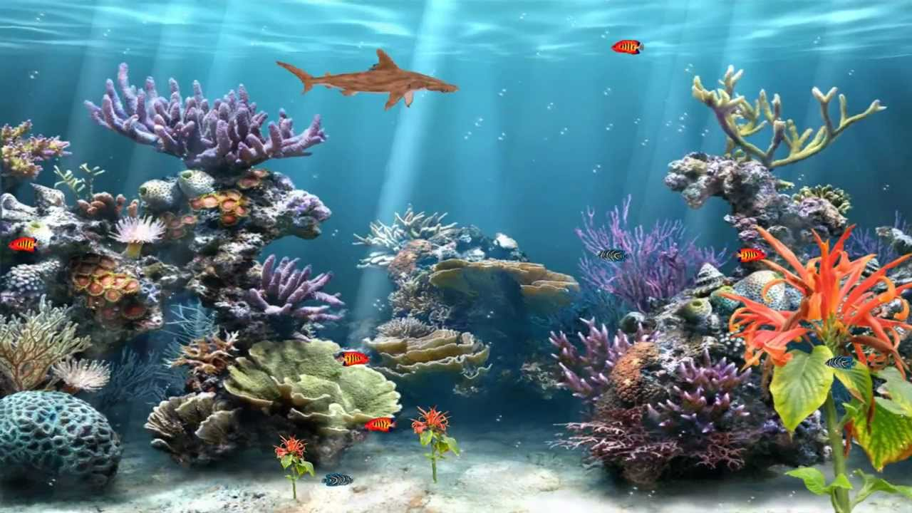 Coral reef aquarium animated wallpaper http www for Aquarium video