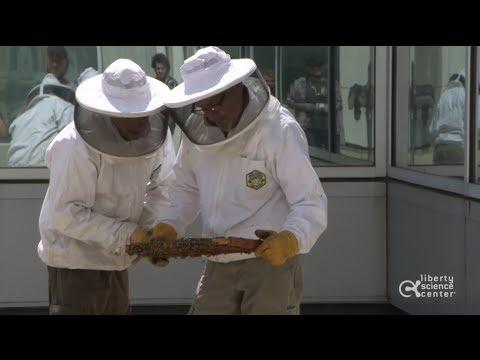 Honey Bee Installation at Liberty Science Center