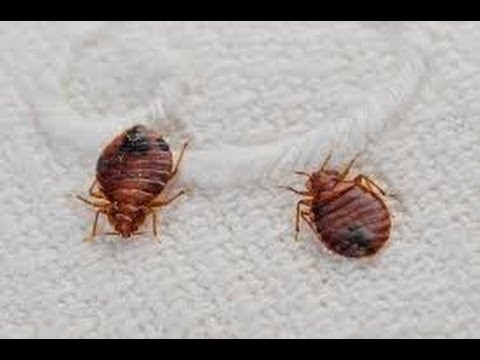 Spraying Bed Bugs Fords and Helmetta NJ 732-640-5488 | Bed Bug Inspection NJ