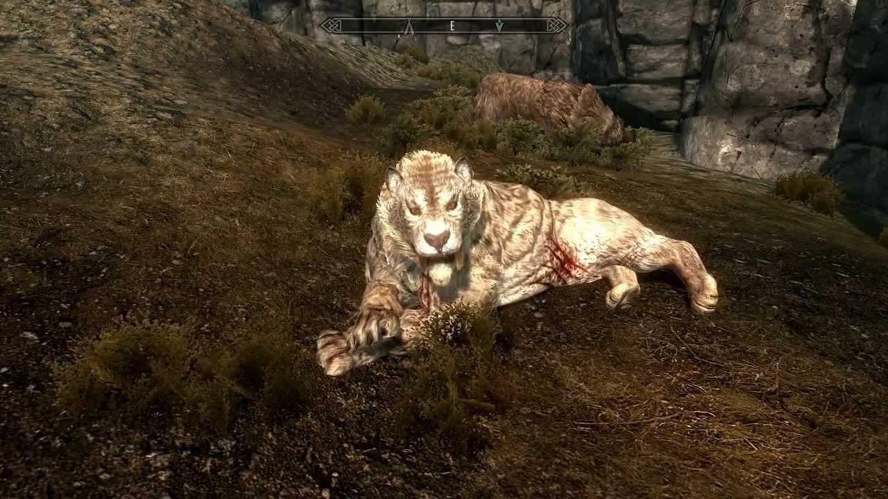 Skyrim Sabre Cat Pet