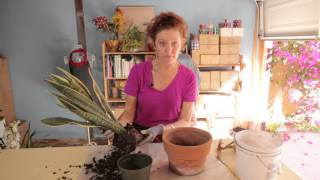 Repotting A Snake Plant : Gardening With Flowers