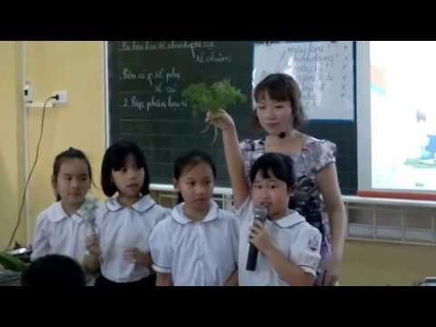 Rễ cây - Lớp 3 - Tiểu học Thành Công B - Hà Nội
