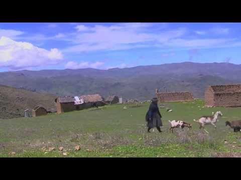 Pasturing goats in the Andes (Viñac, Peru)