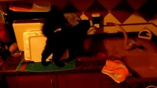 [Mi Gato bebe del Grifo (FunnyAnimals 2013)] Video