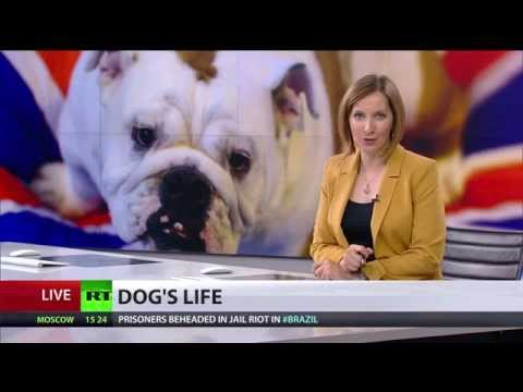 Killing Kindness: UK dogs suffer health problems due to overweight