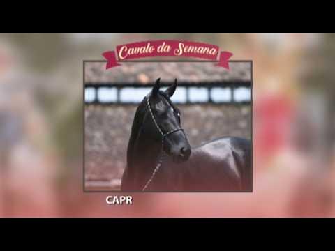 CAVALO DA SEMANA - CAPRICHO DO CÍRCULO D - MANGALARGA MARCHADOR