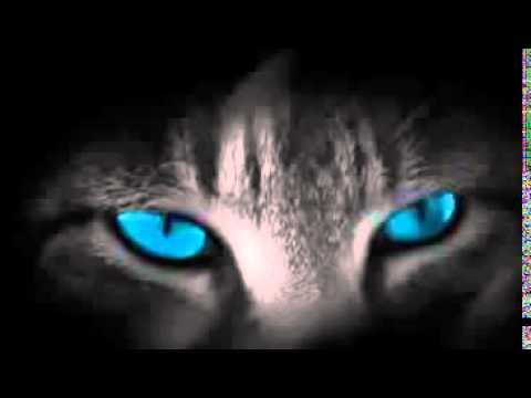 Gatos: Reikianos naturais, por Cristina Cairo (compilado por Johnny De' Carli)