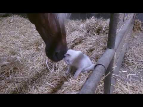 Cat Live with Horse