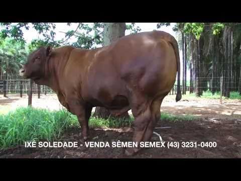 Ixé Soledade (Ano 2011)